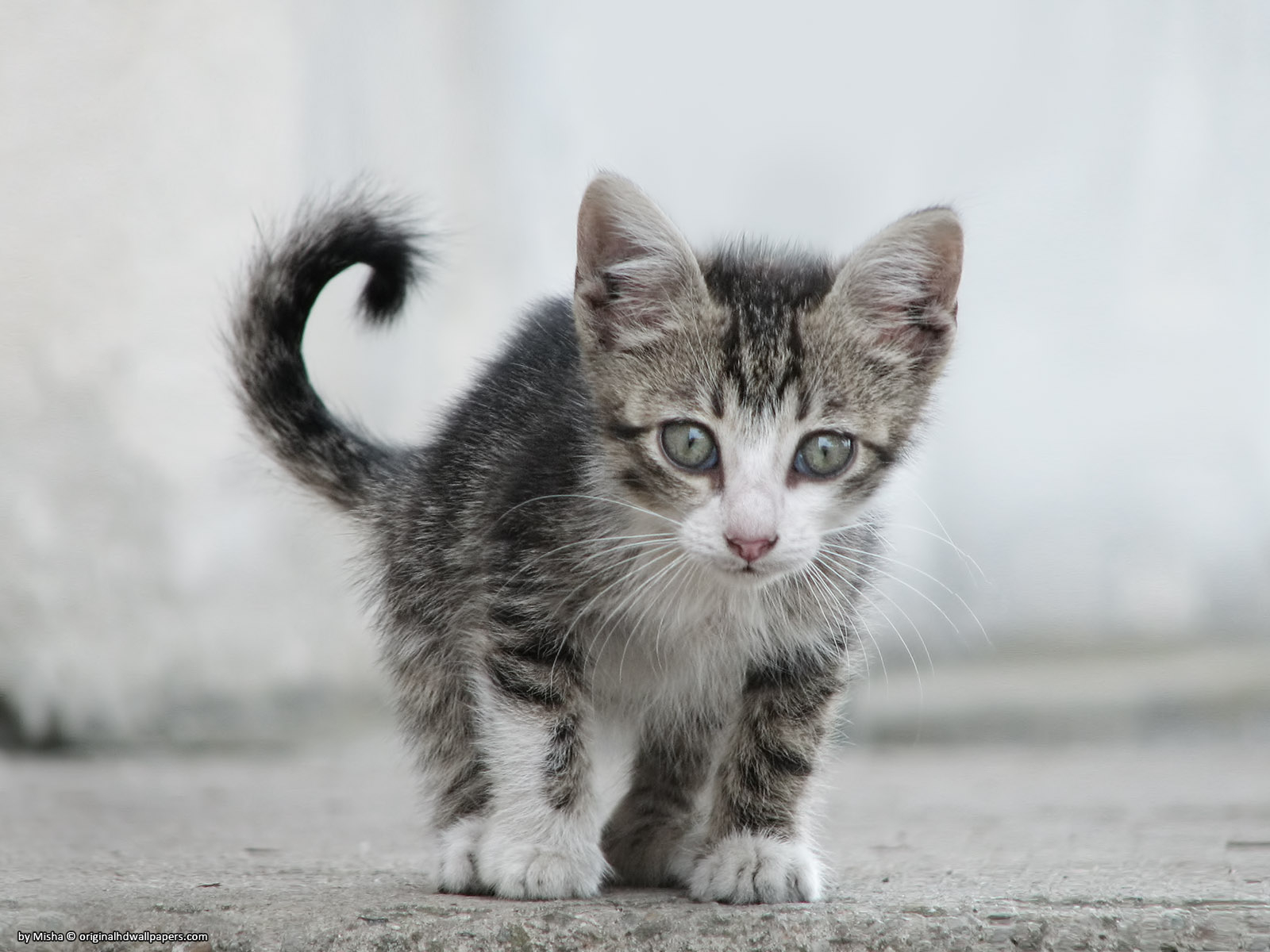 Small Sweet Cat for 1600 x 1200 resolution