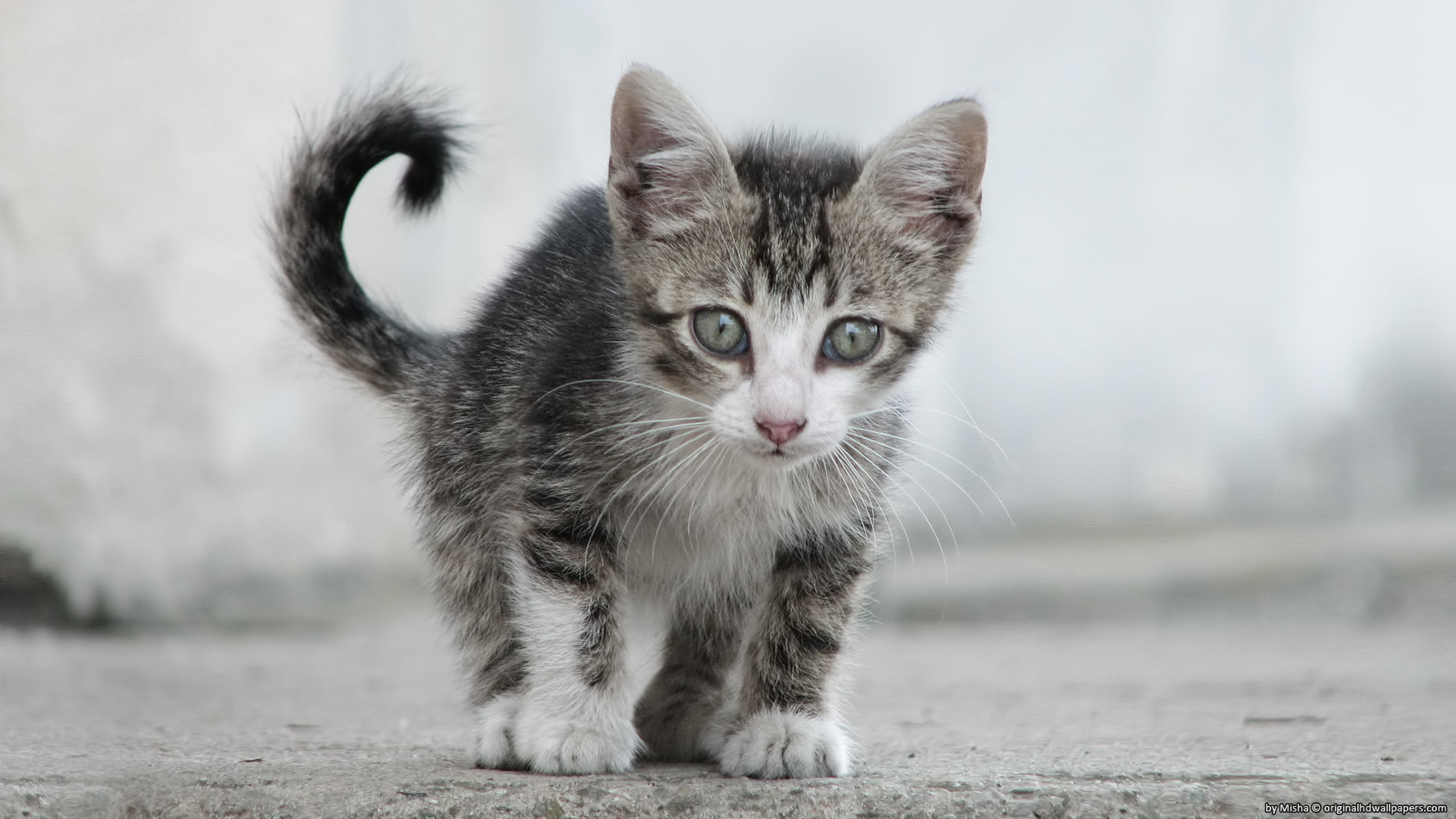 Small Sweet Cat for 1920 x 1080 HDTV 1080p resolution